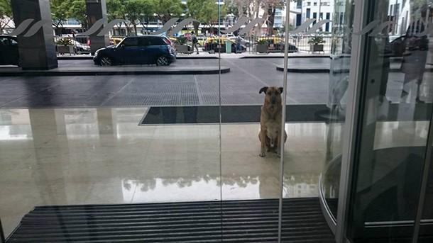 Novyj risunok 1 11 - Пёс сбежал к хозяйке, которую сам выбрал