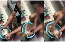 С помощью кошки дедушка показал, как купать младенца