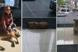 Пёс сбежал к хозяйке, которую сам выбрал