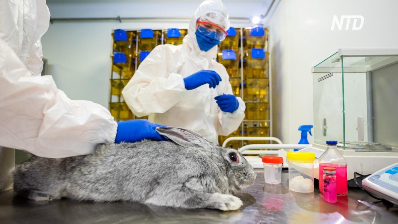 В России зарегистрировали первую в мире вакцину от COVID-19 для животных