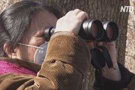 Понаблюдать за птицами в Центральном парке: жители Нью-Йорка запасаются биноклями