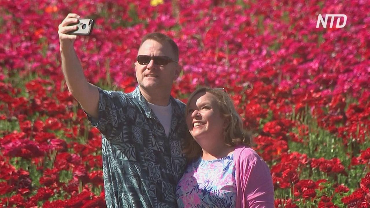 70 млн лютиков: в Калифорнии цветущие поля привлекают туристов