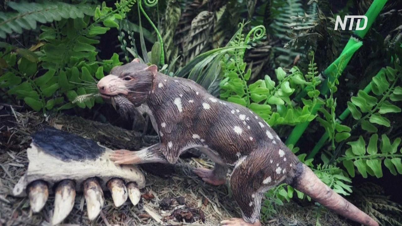 В Чили нашли окаменелость ранее неизвестного животного возрастом 74 млн лет