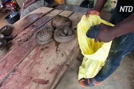 ВОЗ призывает приостановить торговлю дикими животными на рынках