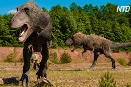 Оказывается, на Земле жило 2,5 млрд тираннозавров