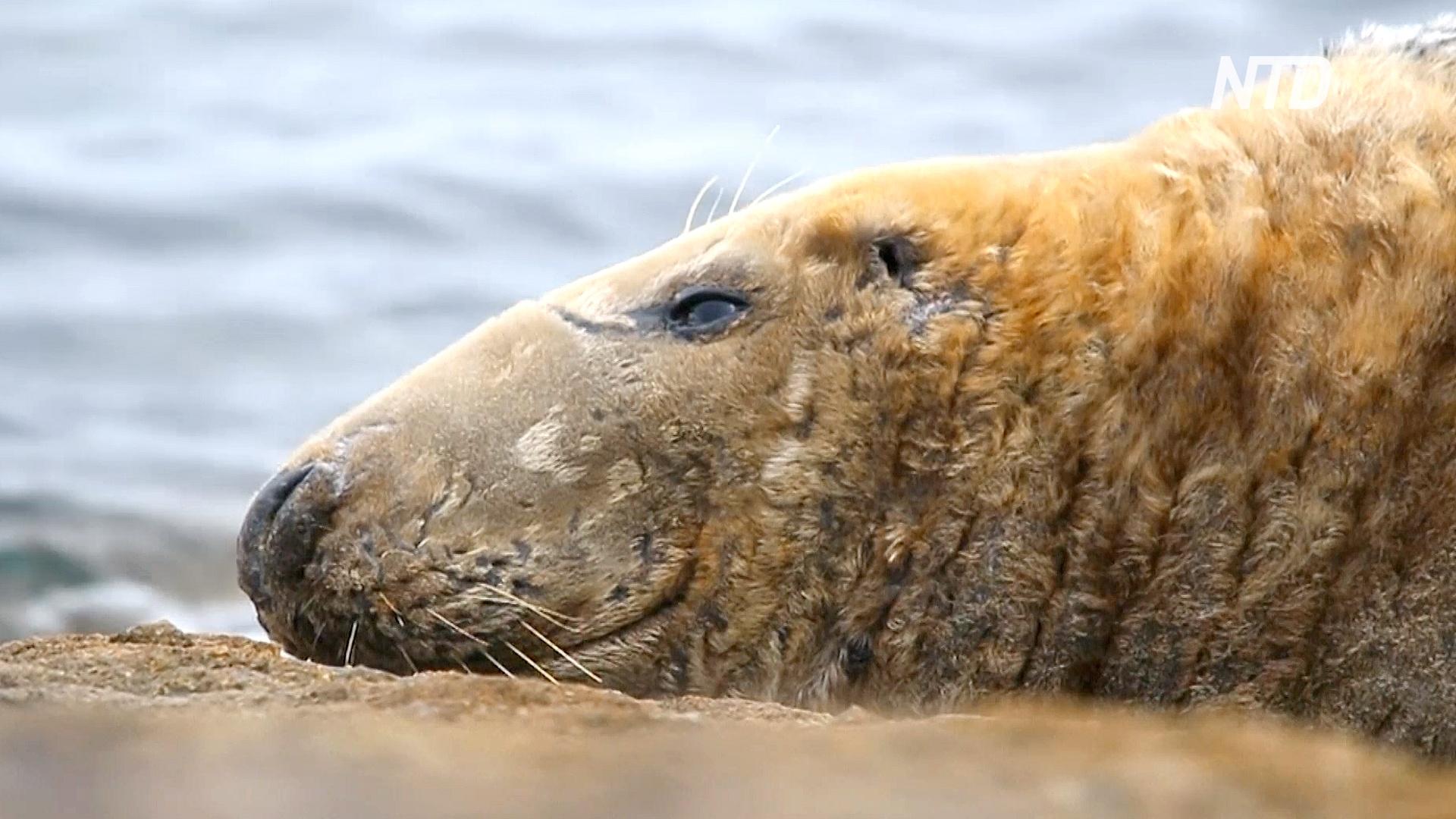 Новое приложение для наблюдения за тюленями поможет защитить их от угроз