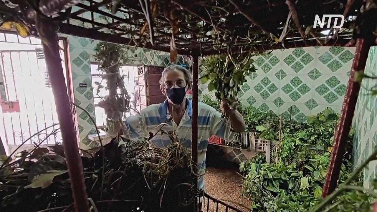 Из-за дефицита лекарств кубинцы переходят на лечение травами