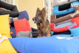 Египтянки шьют лежаки для собак и помогают своим семьям и приютам для животных