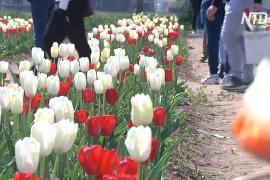 Итальянцы наслаждаются весной на тюльпановом поле