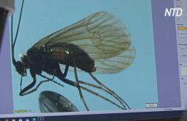 Новый вид насекомого назвали в честь коронавируса