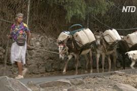 Жители Мехико вынуждены доставлять воду на ослах