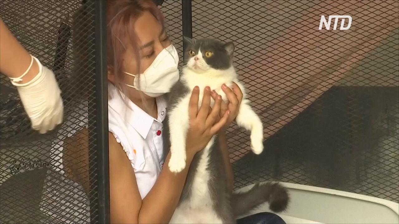 В Таиланде продали на аукционе шесть кошек, изъятых у подозреваемой в наркоторговле