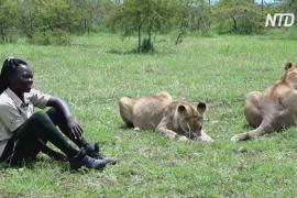 Угандийка не боится хищников и играет с ними, как с домашними питомцами