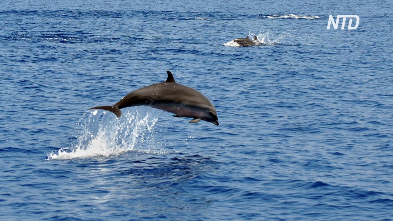 В Индонезии спасли дельфинов, которых незаконно заставляли выступать