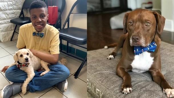 Зачем подросток шьёт галстуки-бабочки для бездомных животных