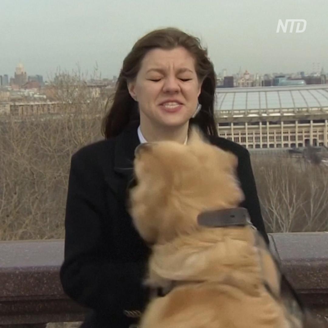 Как собака украла микрофон в прямом эфире