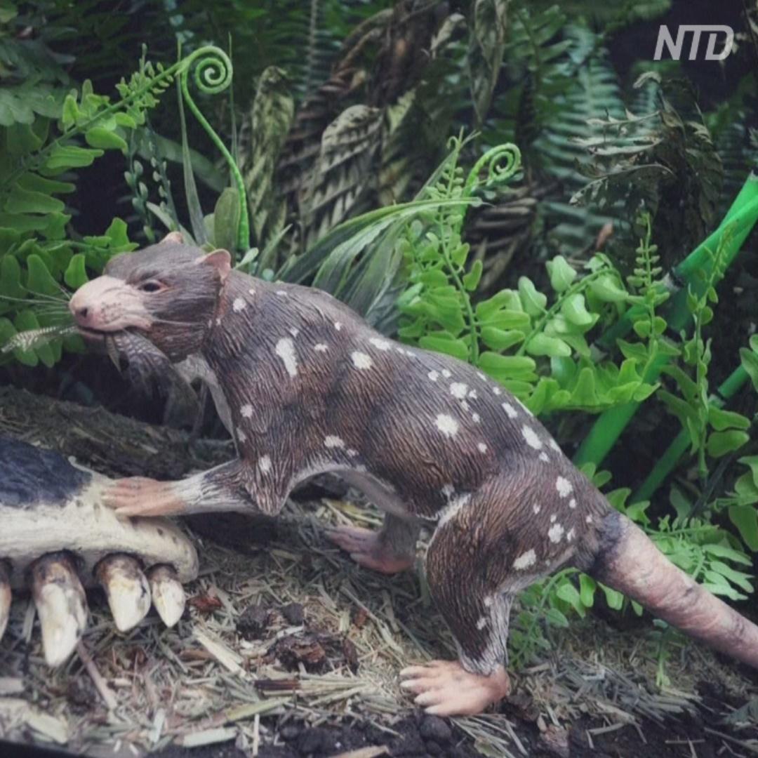 Как выглядел «пятизубый зверь», живший 74 млн лет назад
