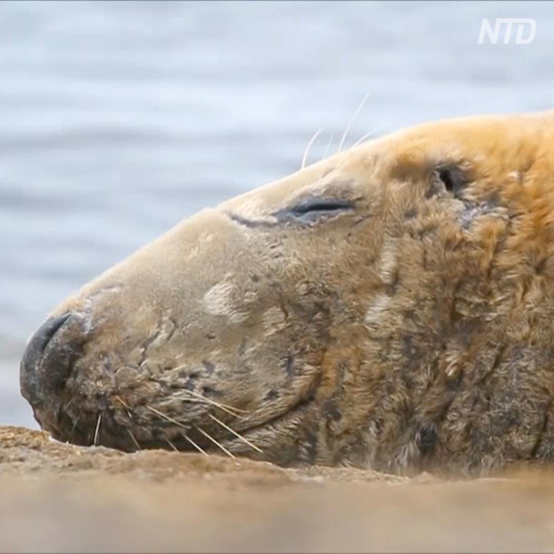 За тюленями наблюдают с помощью нового приложения