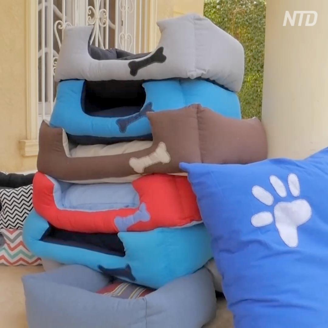 Яркие и мягкие: как в Египте шьют лежаки для собак