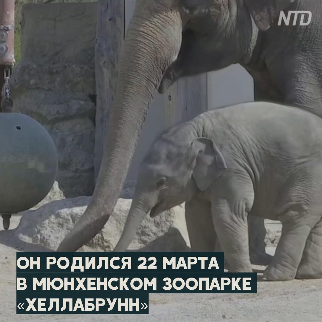 Слонёнок исследует мир в вольере мюнхенского зоопарка