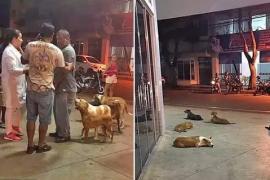 Зачем шесть собак преследовали скорую помощь