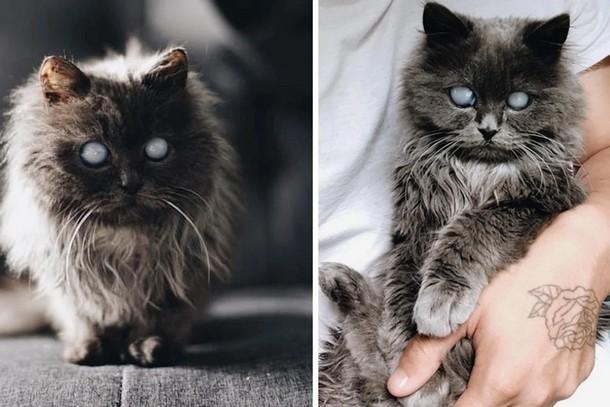 Кого пара взяла из приюта вместо сиамского котёнка