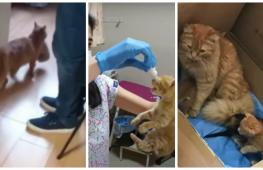 Турция: зачем бездомная кошка принесла котят в больницу