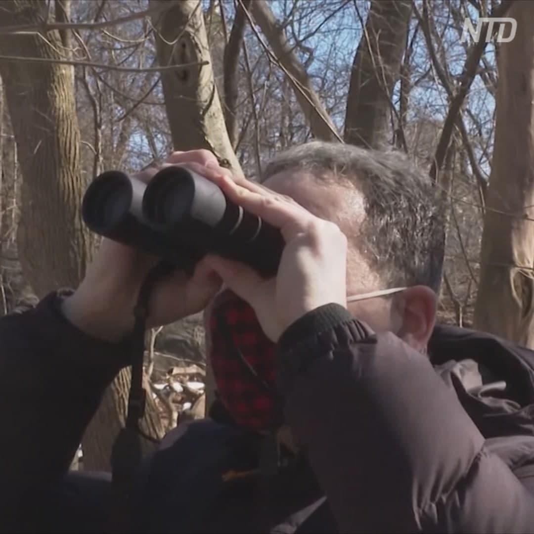 В Центральном парке Нью-Йорка развелось слишком много наблюдателей за птицами