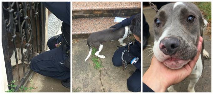 Как собака и полицейский нашли друг друга