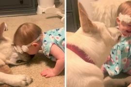 Как собака вернула поцелуй малышке
