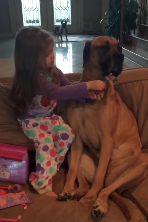 2021 05 07 151524 - Как малышка «лечила» собаку. Весёлое видео
