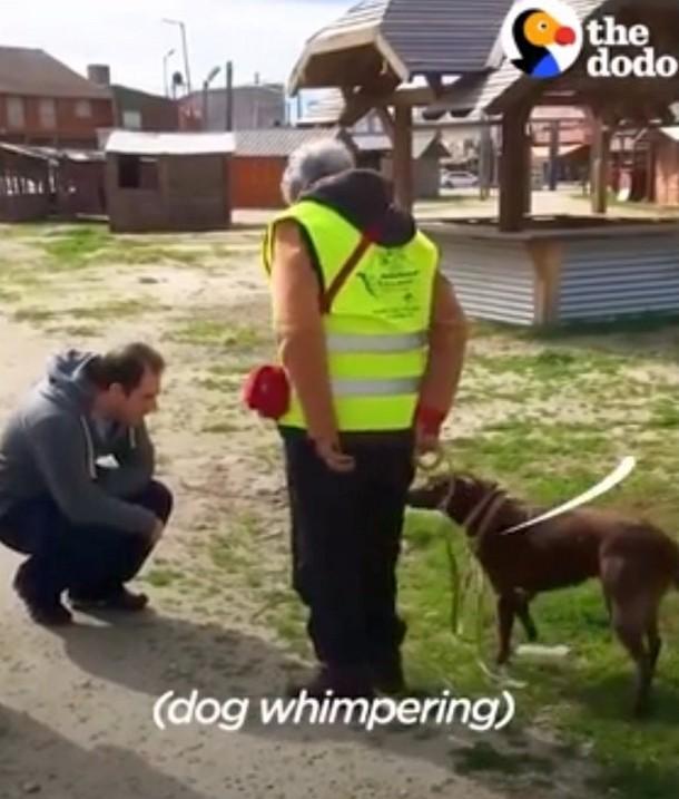 2021 05 11 183159 - Как собака воссоединилась с хозяином спустя два года разлуки
