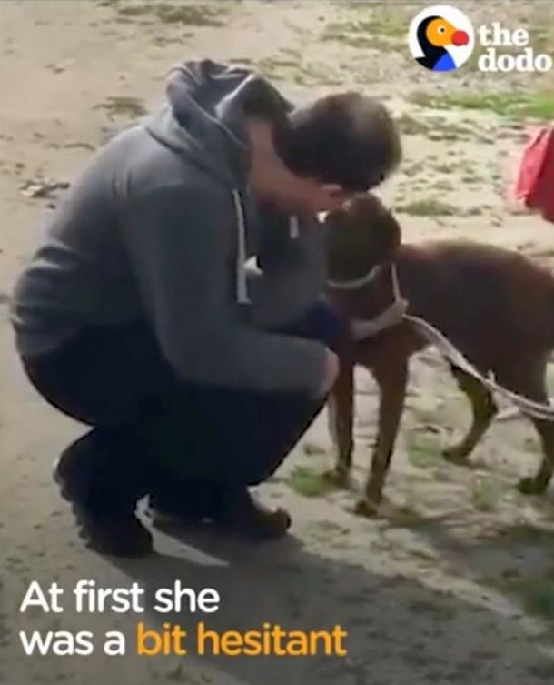 2021 05 11 183434 - Как собака воссоединилась с хозяином спустя два года разлуки