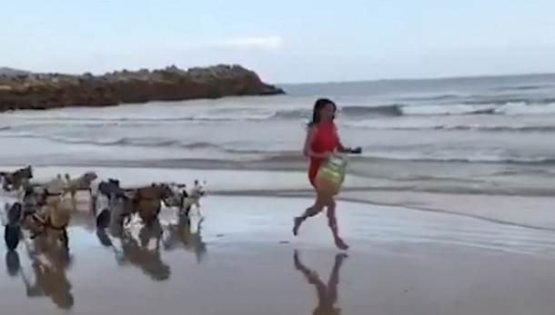 2021 05 19 153609 - Куда 18 собак–инвалидов отправились на прогулку