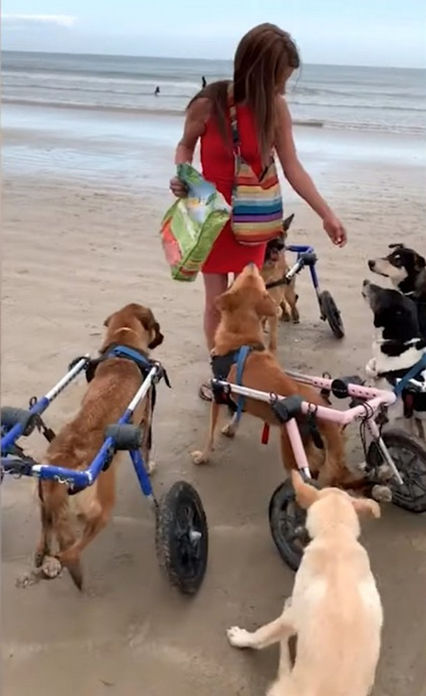 2021 05 19 153707 - Куда 18 собак–инвалидов отправились на прогулку