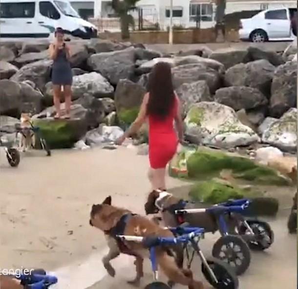 2021 05 19 153926 - Куда 18 собак–инвалидов отправились на прогулку