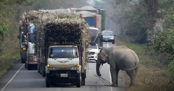 Зачем слон устроил блокпост на дороге