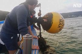 Акустический мониторинг поможет следить за рыбой в Ла-Манше