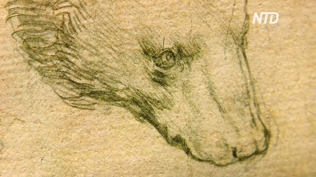 Рисунок головы медведя Леонардо да Винчи может принести до $16 млн