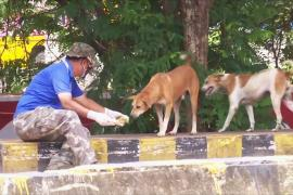 Индийцы во время локдауна кормят бродячих собак и коров