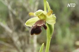 В испанской Малаге растёт 52 вида орхидей: ботаники продолжают искать новые