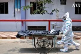 Печальная веха: число умерших от COVID в Индии превысило 250 000