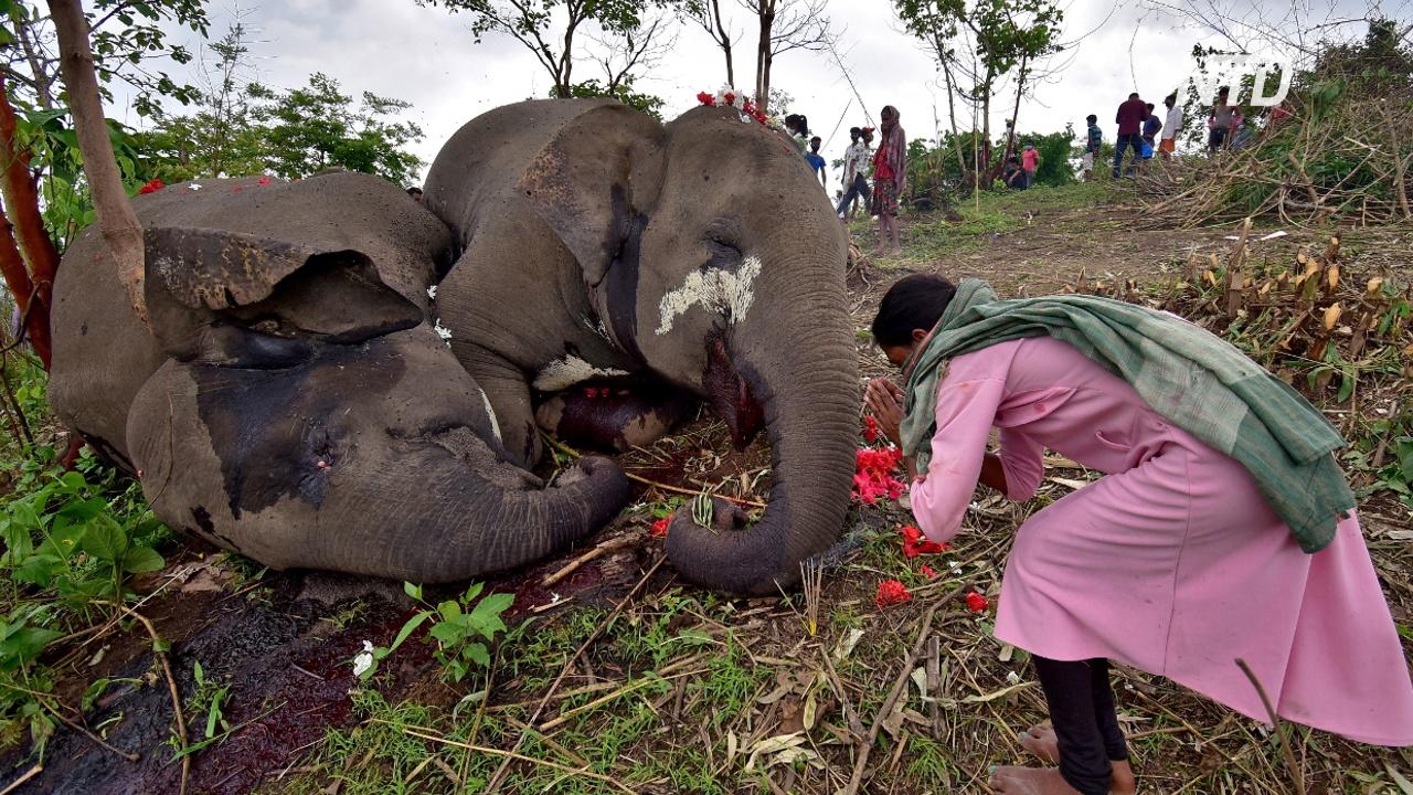 Молния убила 18 слонов в Индии