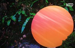 Уникальные цвета, созданные природой, представили на выставке в Лондоне