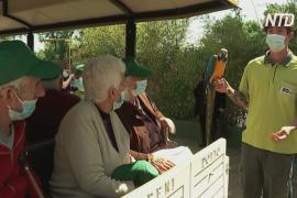 Пандотерапия: жителей мадридского дома престарелых вывезли на прогулку в зоопарк