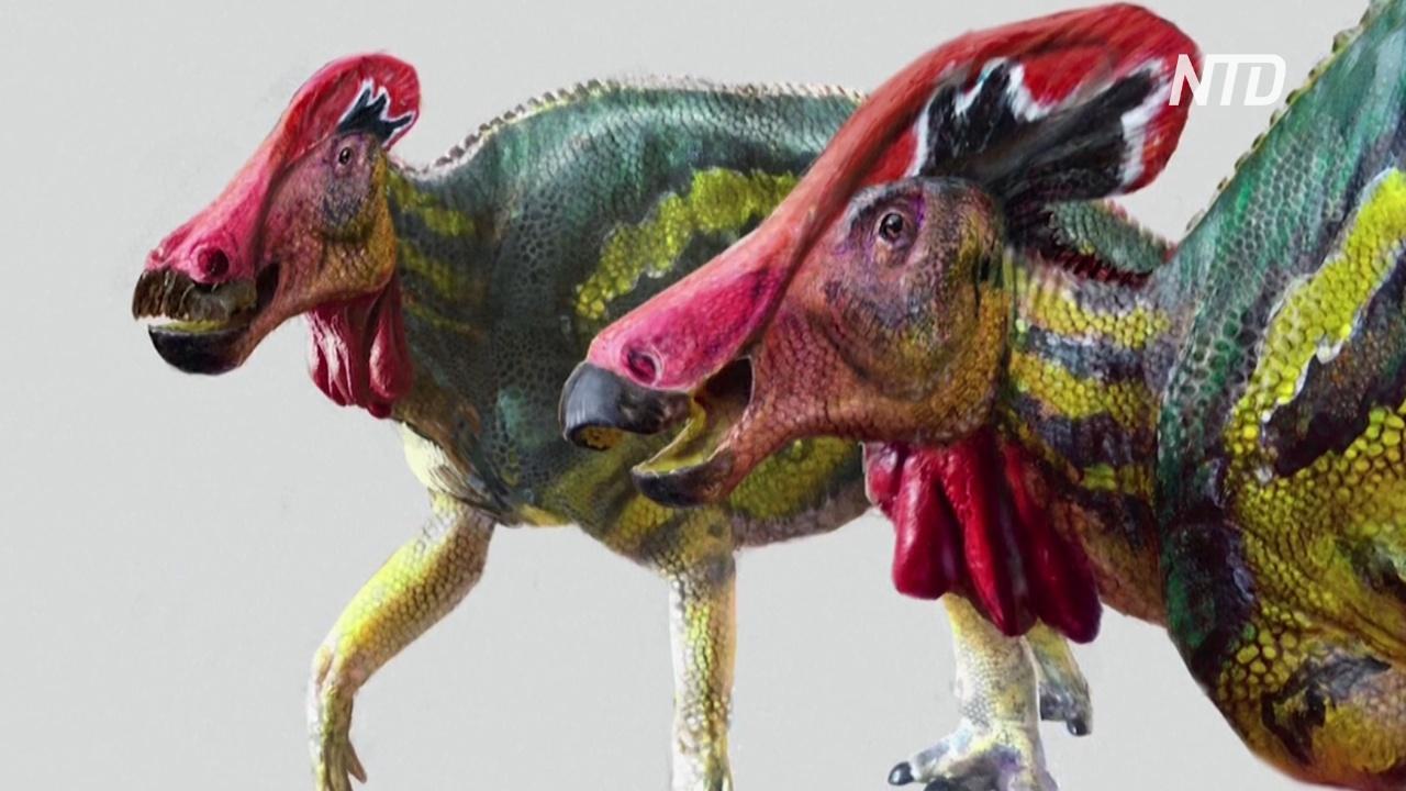Мексиканские учёные открыли новый вид динозавров с гребнем