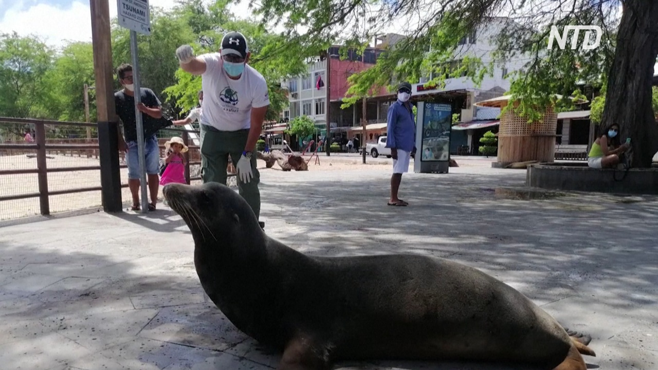 На Галапагосах морского льва сбила машина