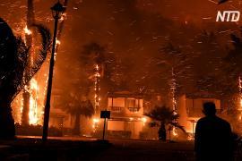 В Греции людей эвакуируют из-за лесного пожара