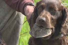 Собаки помогают учёным искать черепах