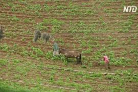 Дефицит дизельного топлива парализовал венесуэльские фермы
